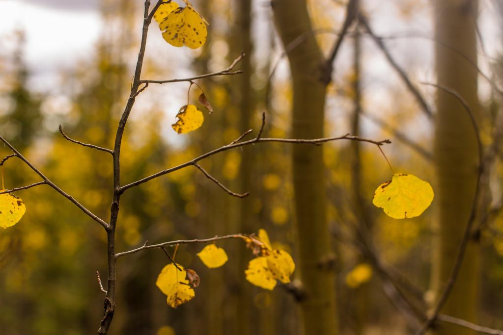 gelbes Laub am Baum