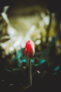 Blüte kurz vorm Öffnen