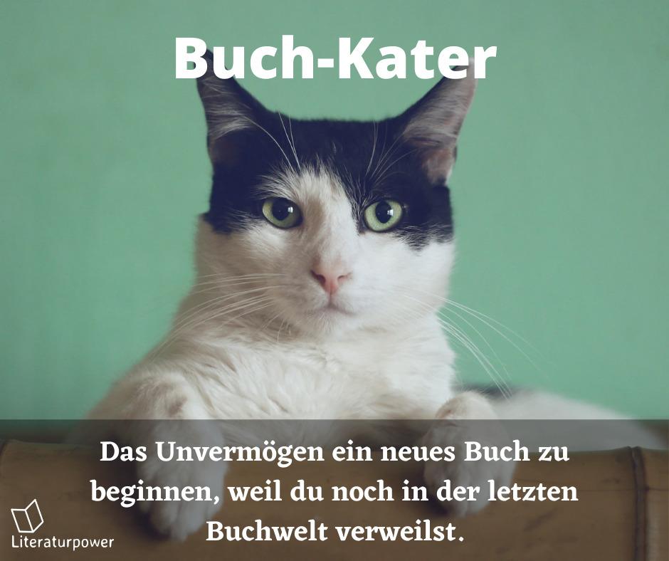 Meme Buchkater