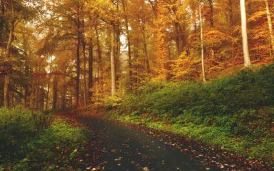 Wie geht Sustainable Publishing? | Gastartikel von Laura Nerbel